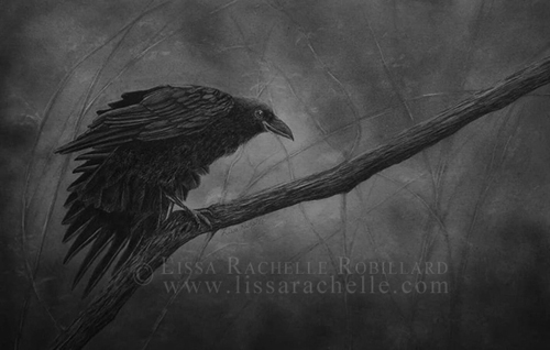 pencil drawing portrait of raven crow bird called Night's Breath